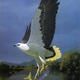 Preview thumbnail sea eagle mary river nt