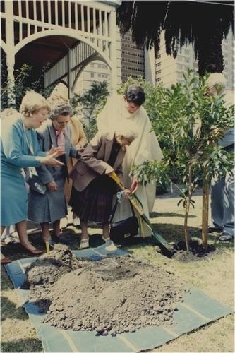 Medium nana stone planting centennary tree at st. joseph s collingwood  october 1987