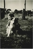 Thumbnail shane   kimie the dog in the paddock at cornishtown circa 1952