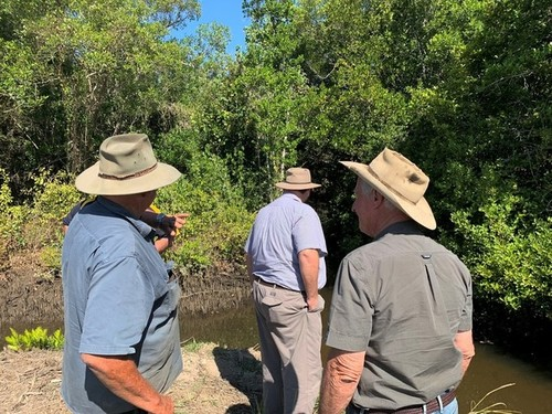 Medium cane farm and mangroves 31 aug 2019