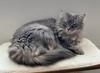 Thumbnail baby cat cat stand june 2020