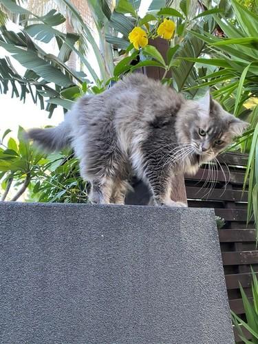 Medium baby cat on side fence new farm june 2020