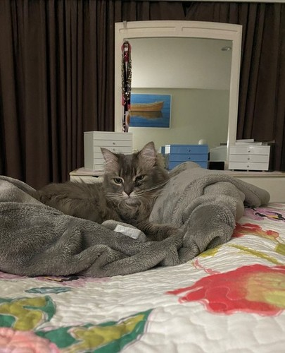Medium baby cat on bed june 2020